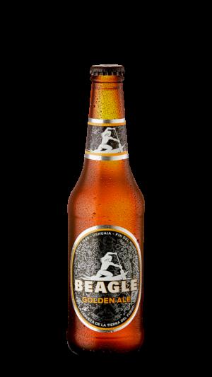 Beagle Golden